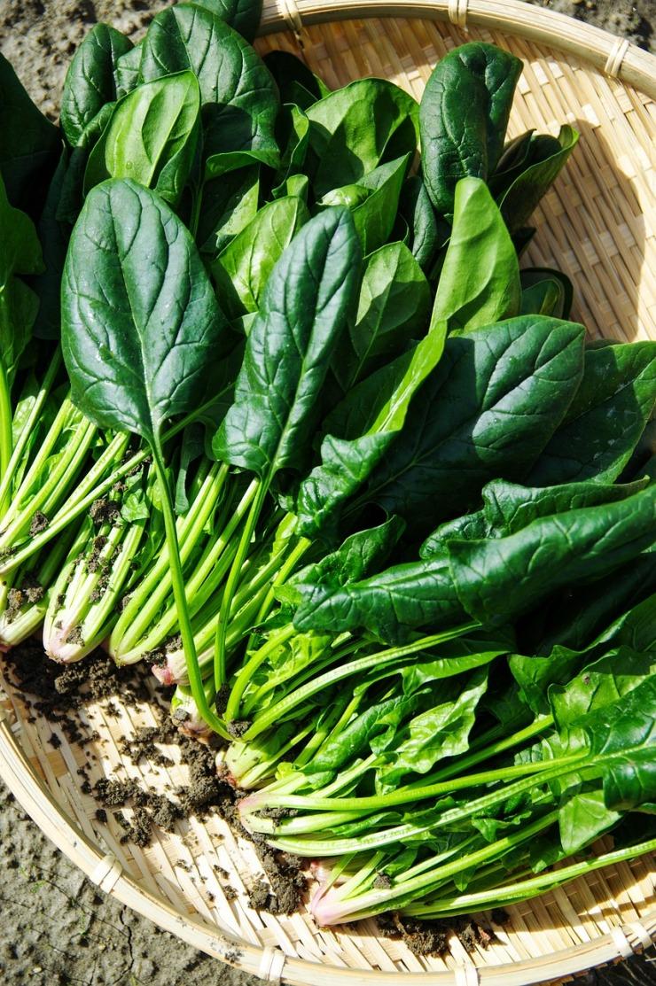 leafy green - spinach